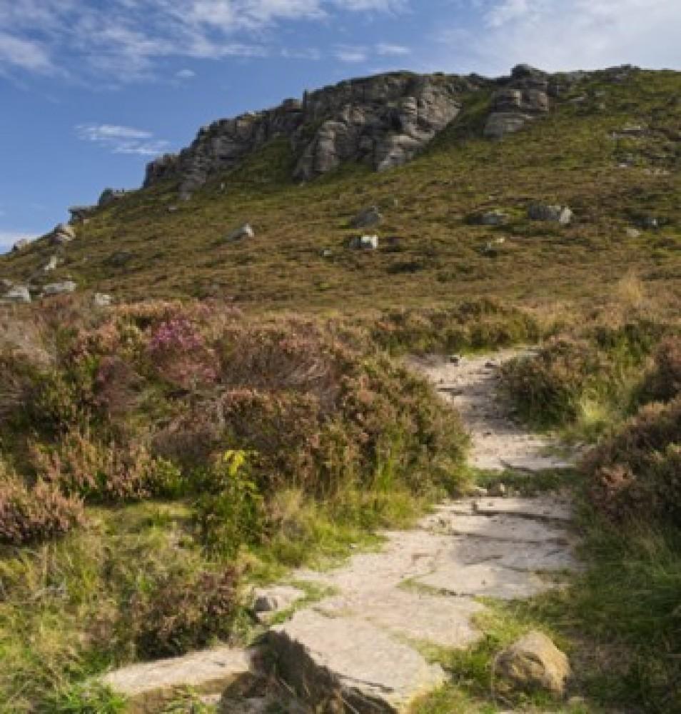 Simonside Hills dog walk, Northumberland - Dog walks in Northumberland