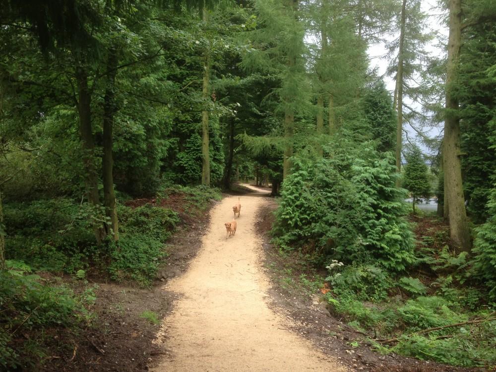 Cod Beck dog walk near Osmotherly, North Yorkshire - Dog walks in Yorkshire