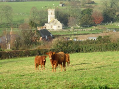 A354 easy dog walk and a pub, Dorset - Driving with Dogs