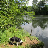 Constable country dog walks and refreshments, Essex