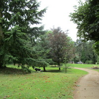 Country Park dog walk near the A45, Northamptonshire - Dog walks in Northamptonshire