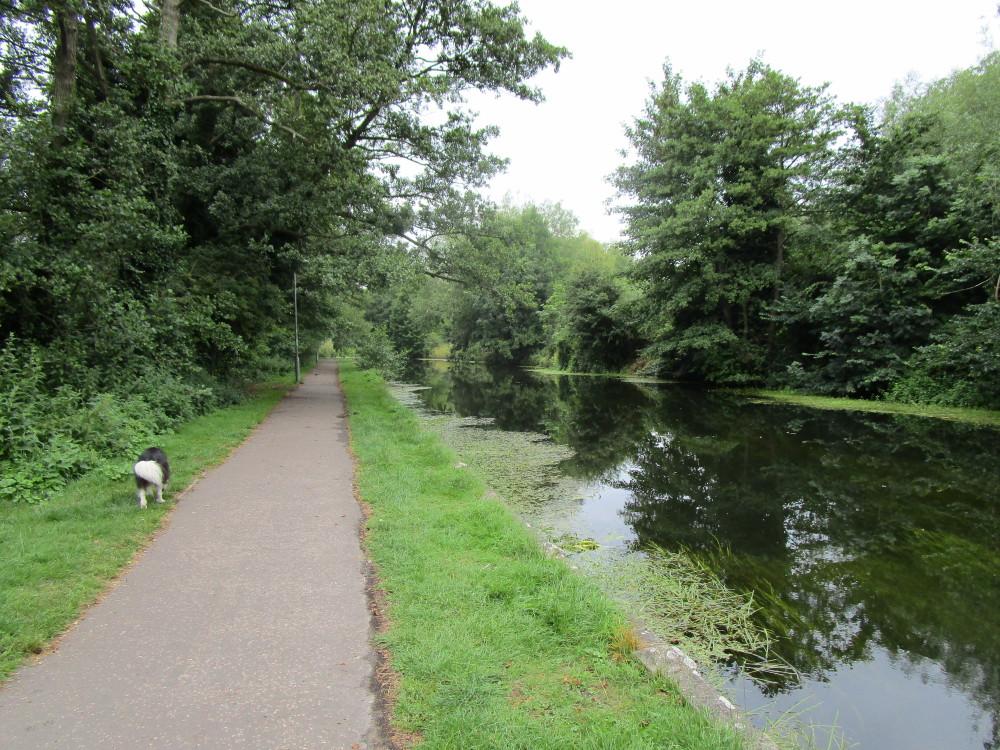 Little Ouse dog walk, Thetford, Norfolk - Dog walks in Norfolk