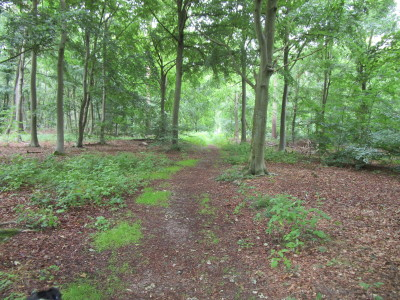 Thetford Forest dog walks, Norfolk - Driving with Dogs
