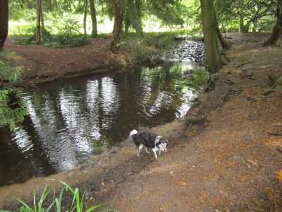 Lynford dog walk near Thetford, Norfolk - Driving with Dogs