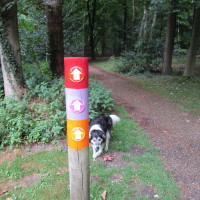 Brandon Country Park dog walks, Suffolk - Dog walks in Suffolk