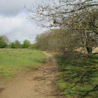 Meadow and river path dog walk near Snape, Suffolk