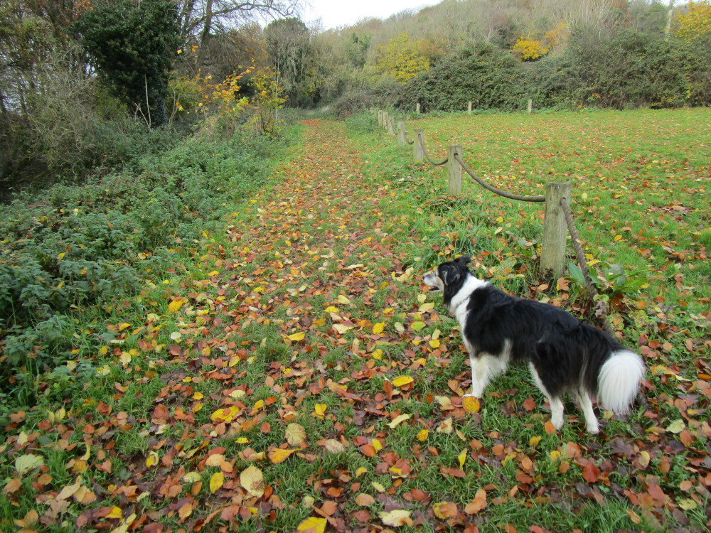 M5 Junction 19 dog walk with a cafe near Nailsea, Somerset - Dog walks in Somerset