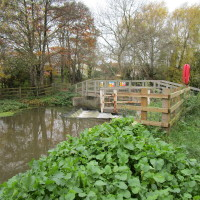 M5 Junction 21 dog-friendly pub and dog walk, Congresbury, Somerset - Dog walks in Somerset