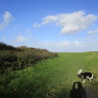 A39 dog-friendly pub with beach walk, Somerset