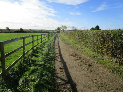 Countryside dog-friendly pub and dog walk, Oxfordshire - Driving with Dogs