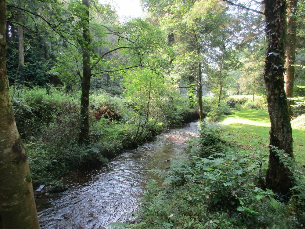 A40 dog walk near Llandovery, Carmarthenshire, Wales - Dog walks in Wales