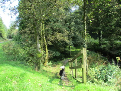 A40 dog walk near Llandovery, Carmarthenshire, Wales - Driving with Dogs