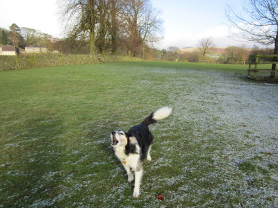 Dog-friendly pub and dog walk near Congleton, Cheshire - Driving with Dogs