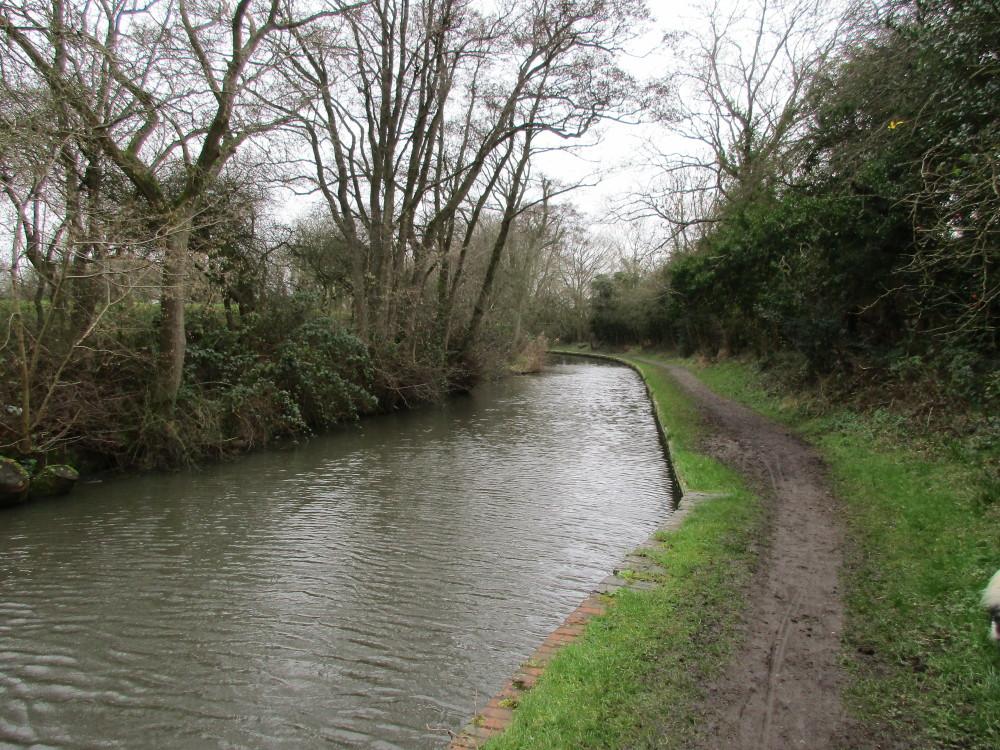 Canalside dog walk with dog-friendly pub near Earlswood, Warwickshire - Dog walks in Warwickshire