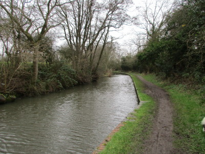 Canalside dog walk with dog-friendly pub near Earlswood, Warwickshire - Driving with Dogs