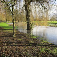 A444 dog friendly pub and dog walk, Warwickshire - Dog walks in Warwickshire
