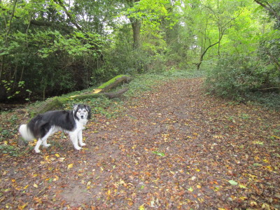 M42 Junction 3 dog-friendly pub and dog walk, Worcestershire - Driving with Dogs