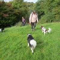 A449 near Droitwich dog-friendly pub and dog walk, Worcestershire - Dog walks in Worcestershire