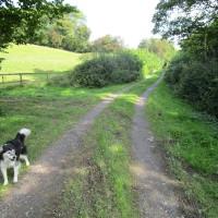 A443 dog-friendly pub and dog walk, Worcestershire - Dog walks in Worcestershire