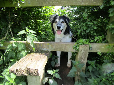 Brownshill Green dog-friendly pub and walk Coventry, West Midlands - Driving with Dogs