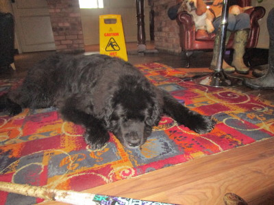 Redditch dog-friendly pub and dog walk, Worcestershire - Driving with Dogs