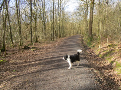 Pepper Woods dog walk, near Belbroughton, Worcestershire - Driving with Dogs