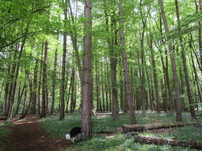 Coventry woodland dog walk, Warwickshire - Driving with Dogs