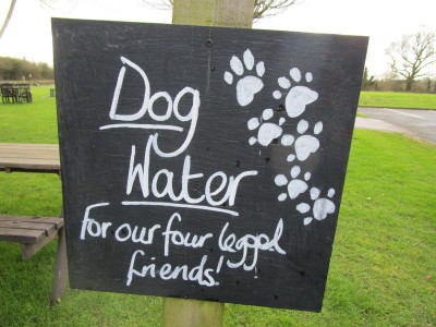 Solihull dog-friendly pub and dog walk, West Midlands - Driving with Dogs