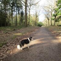 Woodland dog walk, Worcestershire - Dog walks in Worcestershire