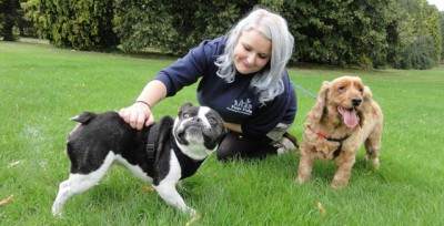 Paw Pals Sutton & NE, Surrey - Driving with Dogs
