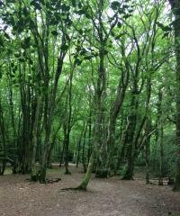 Woodland dog walks near Bexhill, East Sussex - Bexhill dog walks.jpeg