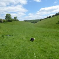 Wonderful walk in the wolds and a dog-friendly pub, East Yorkshire - Yorkshire dog walks
