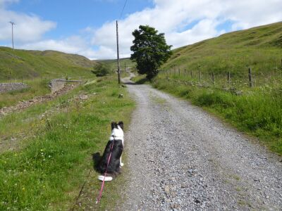 A689 on-lead walk onto the hills, County Durham - Driving with Dogs