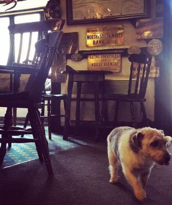 A472 Pretty market town and a woodland dog walk, Wales - Driving with Dogs