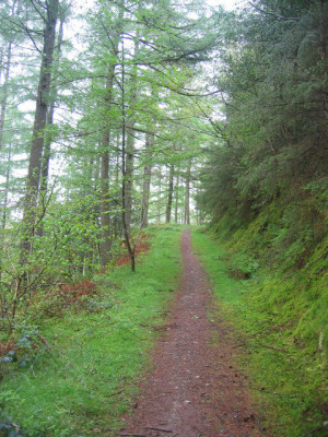 A5 dog walk from Betws-y-Coed, Wales - Driving with Dogs