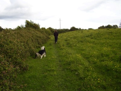 M5 Junction 23 dog-friendly pub and dog walk in Bawdrip, Somerset - Driving with Dogs