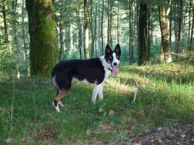Mabie Forest dog walk, Scotland - Driving with Dogs