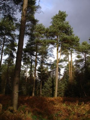 Forest Centre full day dog walks, Yorkshire - Driving with Dogs