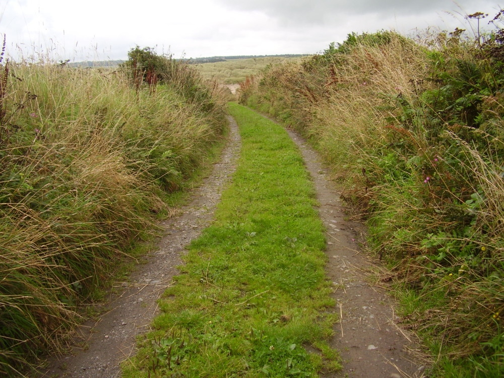 Heritage dog walk, Anglesey, Wales - Dog walks in Wales