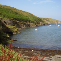 Abercastle dog walk and beach, Pembrokeshire, Wales - Dog walks in Wales