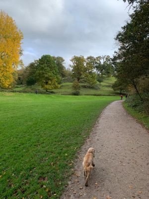 Saltram 2.jpeg - Driving with Dogs