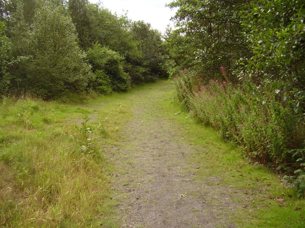 Woodland dog walk near Wrexham, Wales - Dog walks in Wales