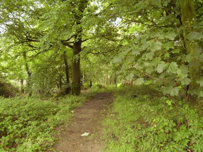 M5 Junction 28 dog walk and dog-friendly pub, Devon - Driving with Dogs