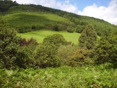 Corris dog walk, Gwynedd, Wales - Driving with Dogs