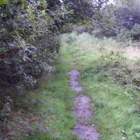 A496 dog walk and dog-friendly pub near Harlech, Wales - Dog walks in Wales