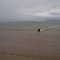 Moelfre area dog-friendly beach, Anglesey, Wales - Dog walks in Wales
