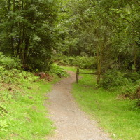 Anglesey forest dog walk, Wales - Dog walks in Wales
