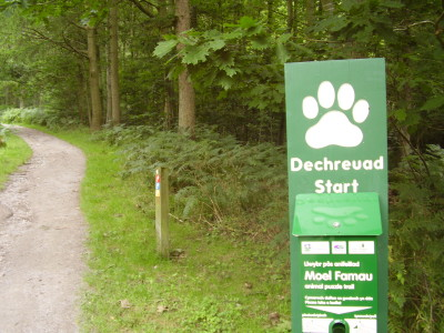 Forest dog walk near Ruthin, Wales - Driving with Dogs