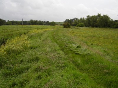 M5 Junction 30 dog walk from Clyst St Mary, Devon - Driving with Dogs