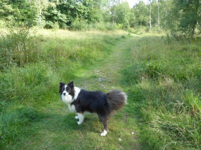 Campsite with excellent dog walk and swimming near Haltwhistle, Northumberland - Driving with Dogs